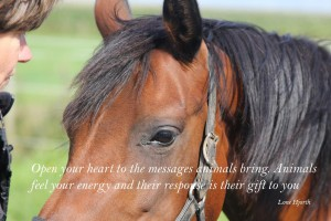 Open your heart to the messages animals bring
