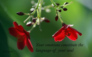 Your emotions constitute the language of your soul